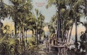 Florida Ormond The Causway At Ormond 1917
