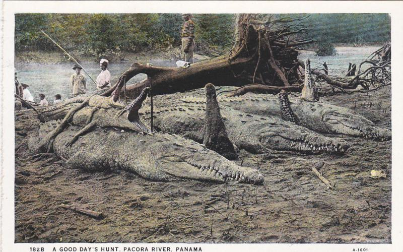 A Good Day's Hunt [Alligators] , Pacora River , Panama , 00-10s