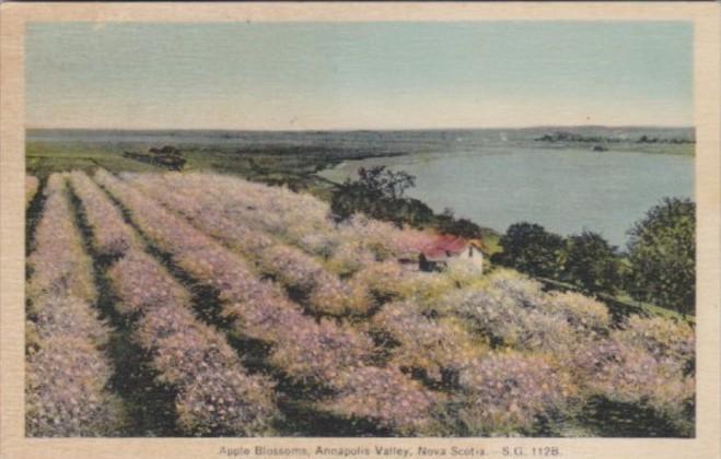 Trees Apple Blossoms Annapolis Valley Nova Scotia Canada 1936
