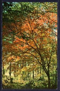 Fall Colors on Iron Mountain,Near Mena,AR BIN