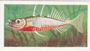 Mitchum Foods Vintage Trade Card Aquarium Fish 1957 2nd Series No 50 Stickleback
