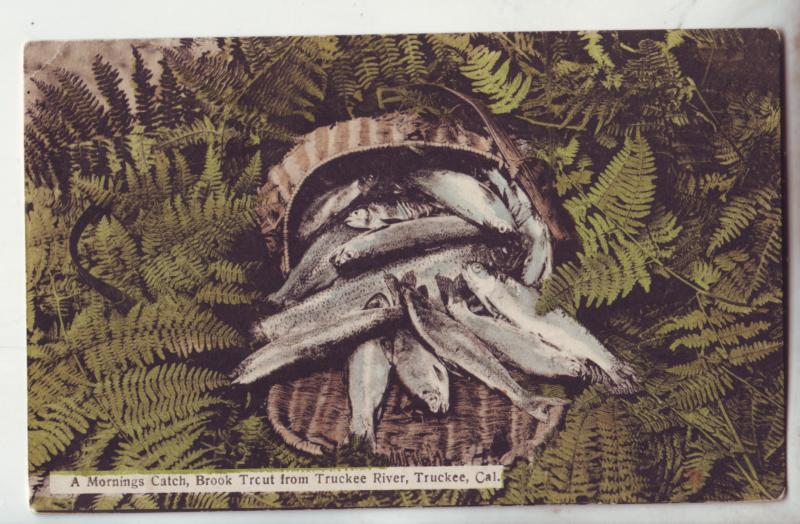 P1119 1910 stamped mornings catch brook trout from tuckee river tuckee calif