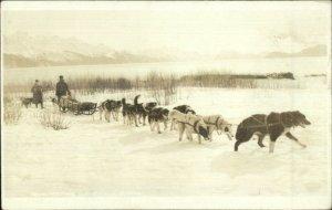 Malamute Husky Dog Sled Team Alaska Mail Team c1910 Real Photo Postcard
