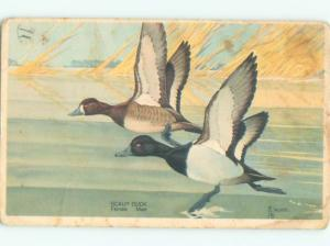 Pre-1980 signed SCAUP DUCK BIRD AC7099
