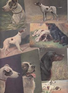 Vintage postcards lot artist signed AUGUST MULLER MUNCHEN dogs animals