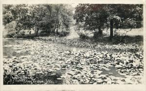 Troy Grove Illinois~Lilly Pond~Pads & Weeds~Trees~1909 Real Photo Postcard~RPPC