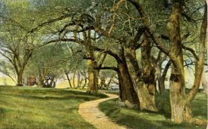 ME - Portland. The Willows, Cushing's Island