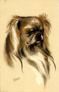 Dog - Pekingese. Artist: R.E. Gaulis