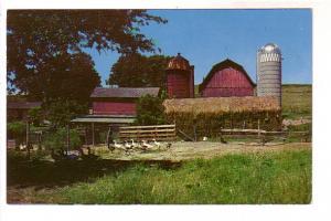 Ducks in a Barnyard, Morehead City, North Carolina,