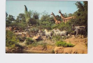 VINTAGE POSTCARD DISNEYLAND ADVENTURELAND AFRICAN VELDT