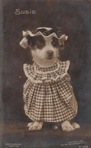 RP; Portrait of Susie the dog in a dress, 1900-10s