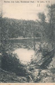 Ravine on Lily Lake in Rockwood Park St John NB New Brunswick Canada pm 1905 UDB