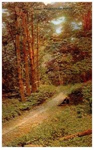 England Sheringham Woods