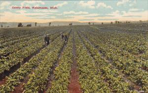 Celery Field, KALAMAZOO, Michigan, 1900-1910s