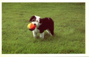 Humour Dog With Ball The North Shore Animal League
