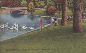 South Carolina Providence Feeding The Swans At Roger Williams Park