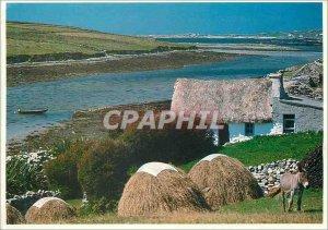 Postcard Modern People Places Ireland Connemara Donkey Donkey
