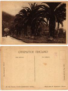 CPA AK GAGRY. Alleya finikhovykh palm. Russia (168883)