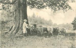 Little Boy in Boots  With Sheep Pastoral Scene Divided Back Photo Postcard