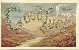 White Heather Flowers Good Luck Language of Flowers Vintage Postcard over 100 yr