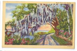 Royal Arch Oak Florida FL Vintage Curteich Linen Postcard