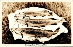 Wellston MI~Trio of Northern Pike Caught~On a Stringer~Tippy Dam Pond~1940s RPPC