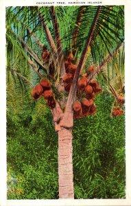 Hawaii Cocoanut Tree Hawaiian Islands