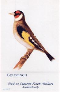 Goldfinch Caperns Bird Food Advertising Postcard