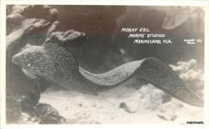 1940s Moray eel Marine Studios Marineland Florida Gerecker RPPC Real photo 10416