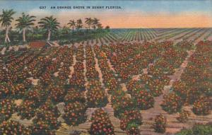 An Orange Grove In Sunny Florida
