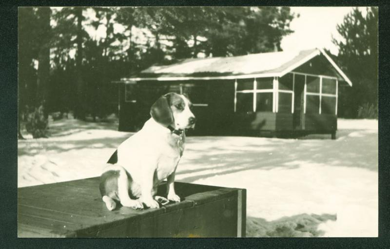 Black Bear Camp STRATTON MAINE BEAGLE DOG Real Photo RPPC Postcard