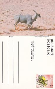 Eland, Namibia, South West Africa, 40-60s