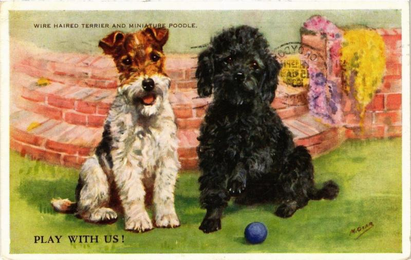 CPA Wire Haired Terrier and Miniature Poodle DOGS (727441)