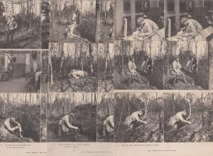 Lot 9 stereographic images stereo views pre 1920 hunting topic hunters poaching