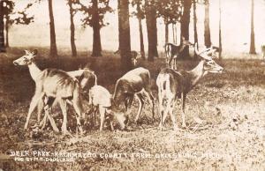 Galesburg Michigan~Kalamazoo County Farm~Deer Park~Skinny Animals~1909 RPPC