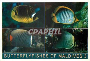 Postcard Modern Butterflyfisches of Maldives