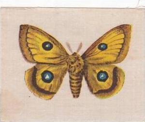 R J Lea Golden Knight Vintage Silk Cigarette Card Butterflies Tau Emperor Moth