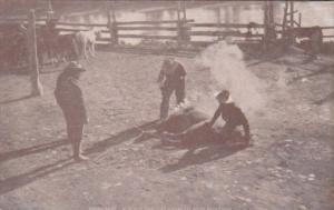 Cows Cowboys Branding Slick Ears Flathead Reservation
