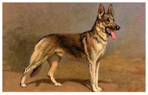 Dog , Alastian Wolfhound