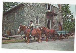 Amish Farmers Horses Wagons Unloading Grain Postcard PA