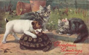 TUCK #9537; CHRISTMAS, 1900-10s; Two Kittens, Jack Russell Puppy & Turtle