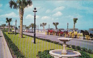 Florida Saint Augustine Sightseeing Carriages