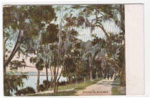 North Walk Ormond Florida 1905c postcard