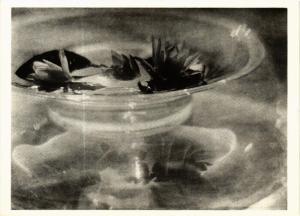 CPM PS12 Still Life Water Lillies 1912 BARON DE MEYER (d1260)
