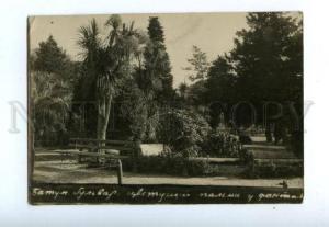 144098 Adjara Georgia BATUMI Boulevard blooming palm Fountain