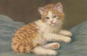 AS: Ginger and White Kitten with blue eyes relaxing on blue blanket, 1900-10s