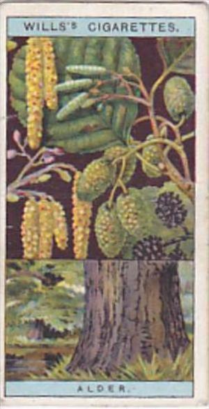 Wills Vintage Cigarette Card Flowering Trees &  Shrubs 1924 No 3 Common Alder