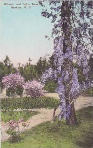 North Carolina Pinehurst Wisteria And Judas Trees Albertype