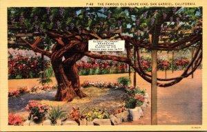 California San Gabriel The Famous Old Grape Vine Curteich