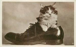 Cute cat sitting in man's dress shoe 1920s RPPC Photo Postcard 5164